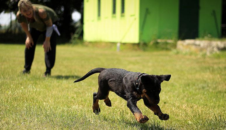 hondensport veendam